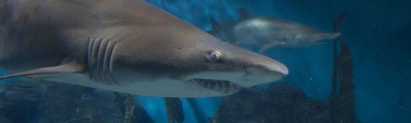 exhibits-banner-shark.jpg